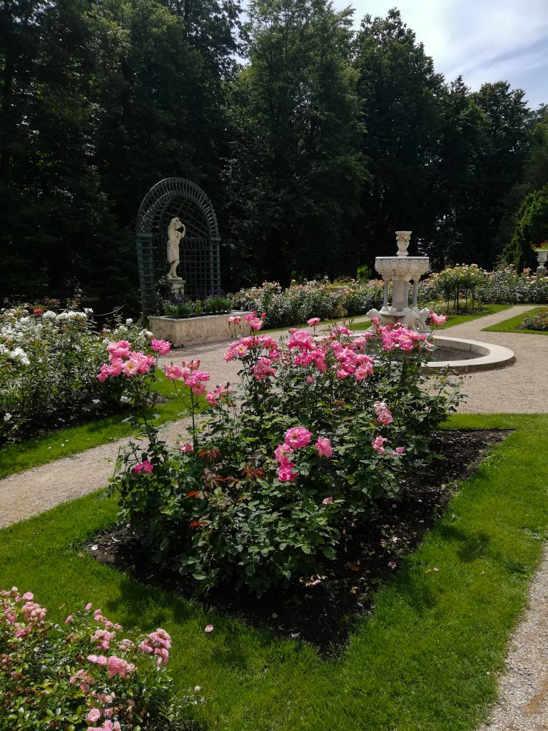 ogród różany
